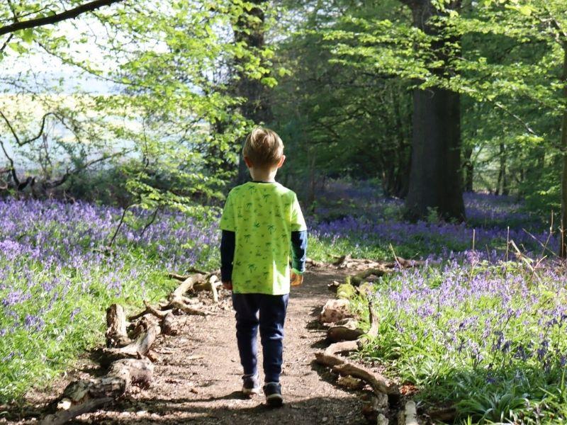 Walking in bluebell woods.