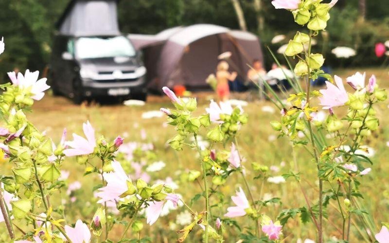 campervan in a field of flowers.