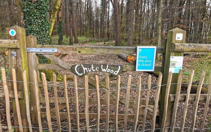 Chute Wood at Dunstable Downs.
