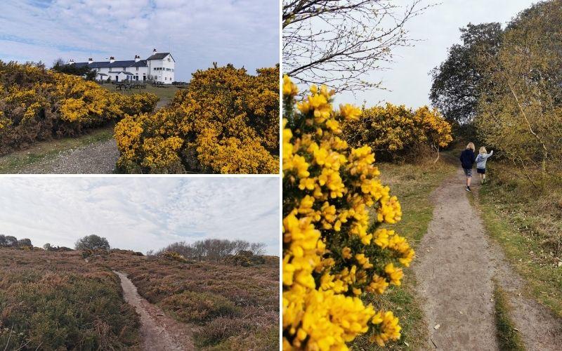 Dunwich Heath gorse walk.