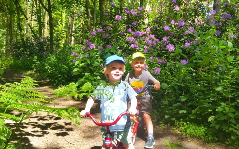 Kids on bikes in a forest of rhododendrons.