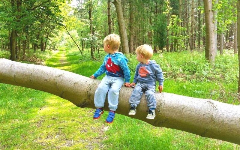 Two little boys sitting on a fallen tree in Dunwich Forest on Dunwich walks.