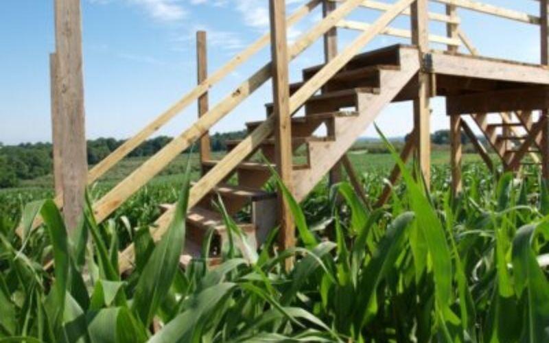 Farmer Copleys Corn Maze.