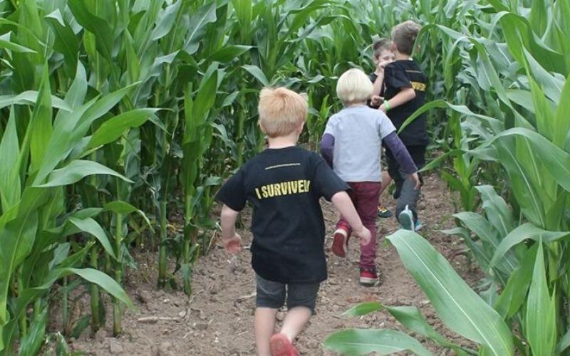 Hillers Maize Maze