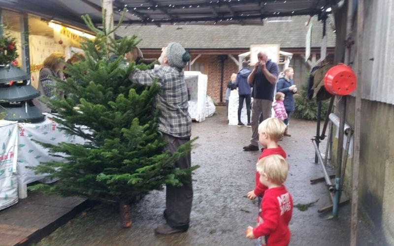 Picking a Christmas tree at Littlefield Farm in Hertfordshire.