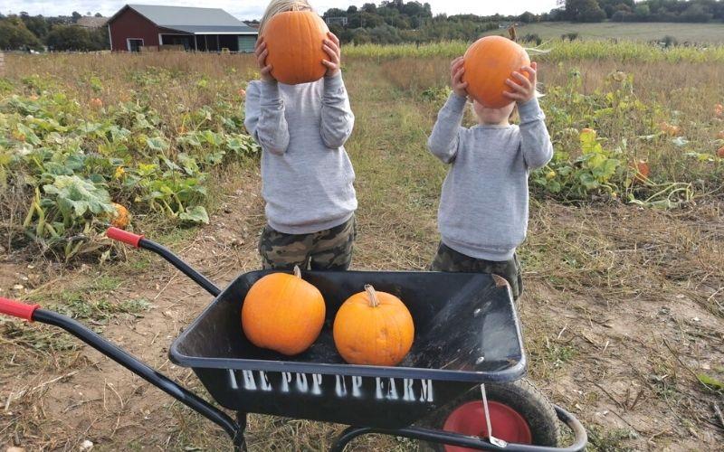 pumpkin picking at the Pop up Farm.
