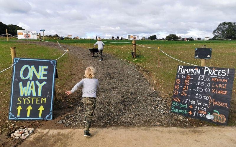 Kids running off to go pumpkin picking in Essex.
