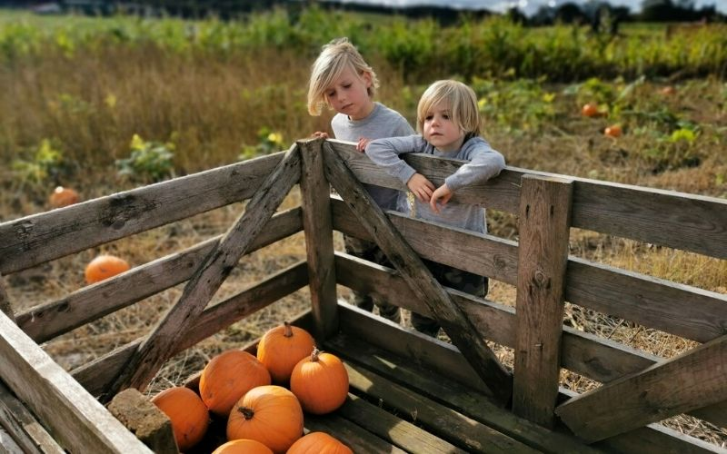 Two little boys picking out pumpkins.