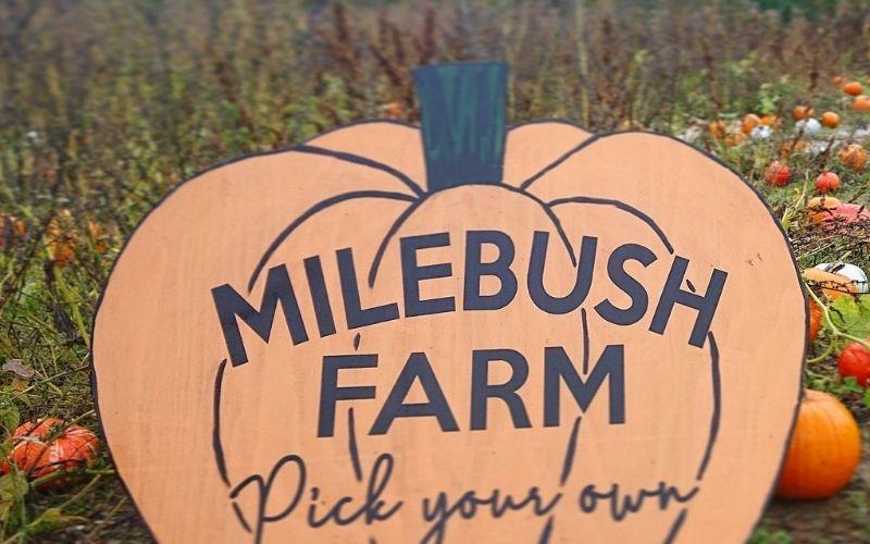 Milebush Farm Pick Your Own Pumpkins.