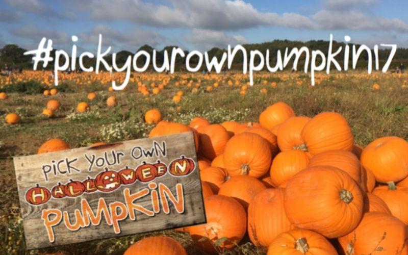 Pick Your Own Pumpkin in Kent.