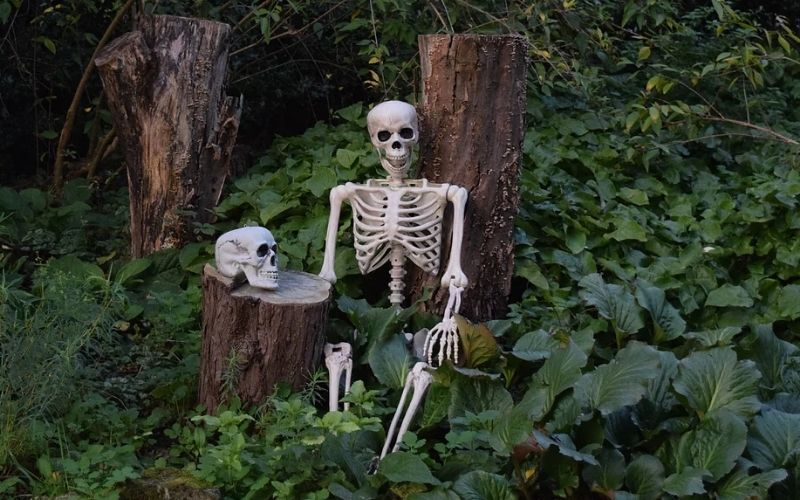 Skeleton leaning against a tree stump at the BOOtanical Trail at Myddelton House Garden in Essex.