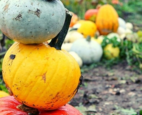 Stack of colourful pumpkins at Pumpkin Moon which is one of the best places to go pumpkin picking in Kent