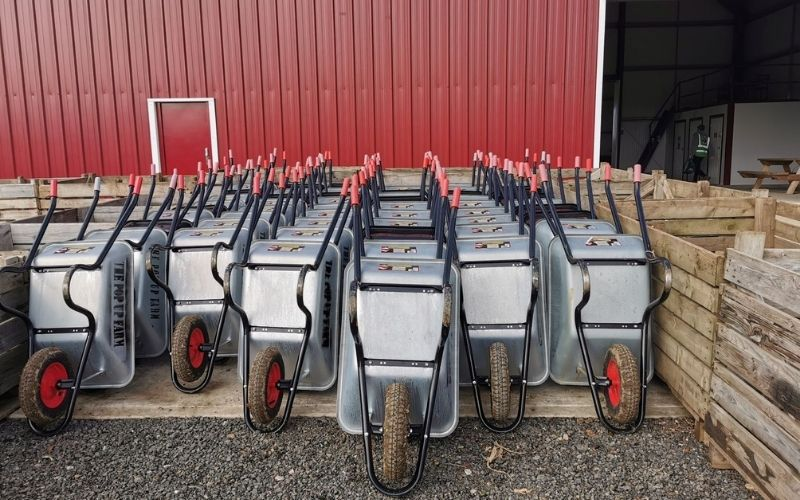 Wheelbarrows lined up ready for pumpkin picking in Kent