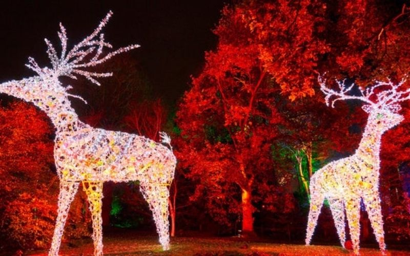 Wimpole Estate Winter Lights Trail one of the best Christmas events in Cambridgeshire.